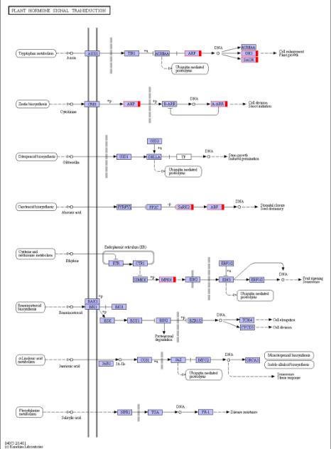 图14  变异基因通路代谢图