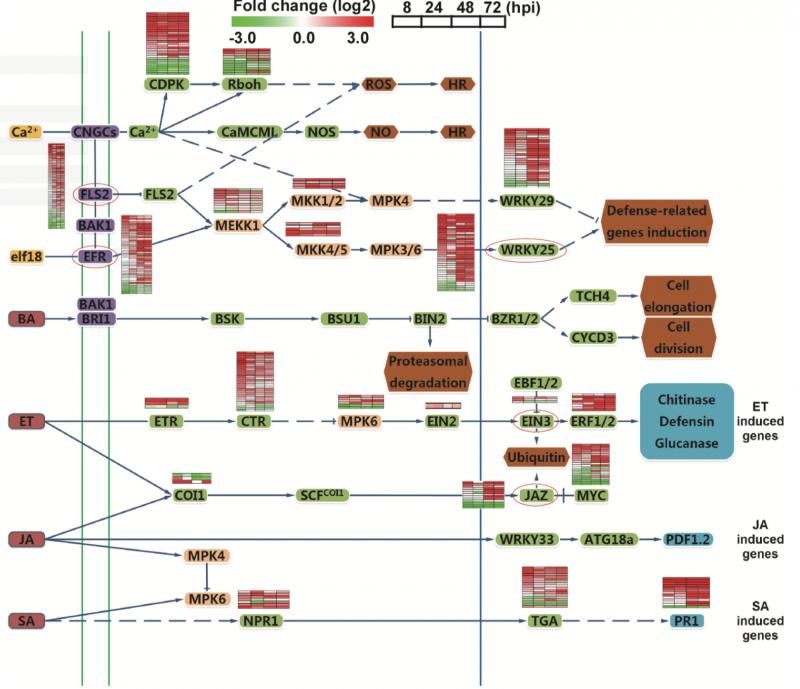 真菌重测序案例1-图2