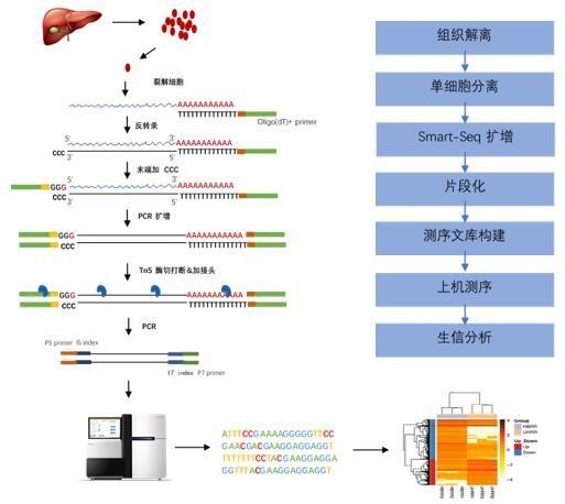 图 单细胞RNA测序技术流程图