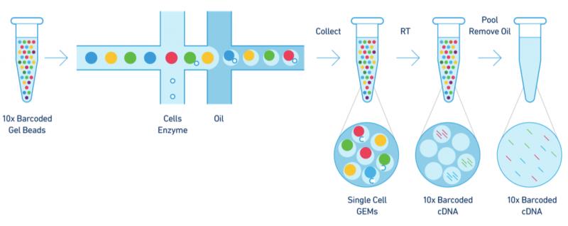 图6 10X Genomics技术原理示意图