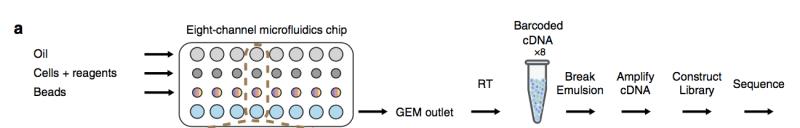 图8   GemCode平台单细胞RNA-Seq工作流程图