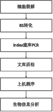 图1 单细胞全基因组甲基化测序产品策略图
