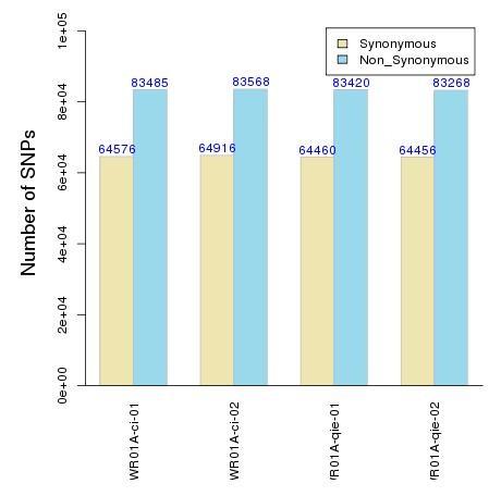 图7  同义和非同义snp统计图