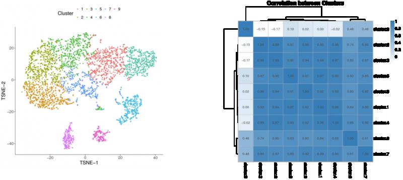 图: 根据不同细胞亚群的cluster中基因平均
