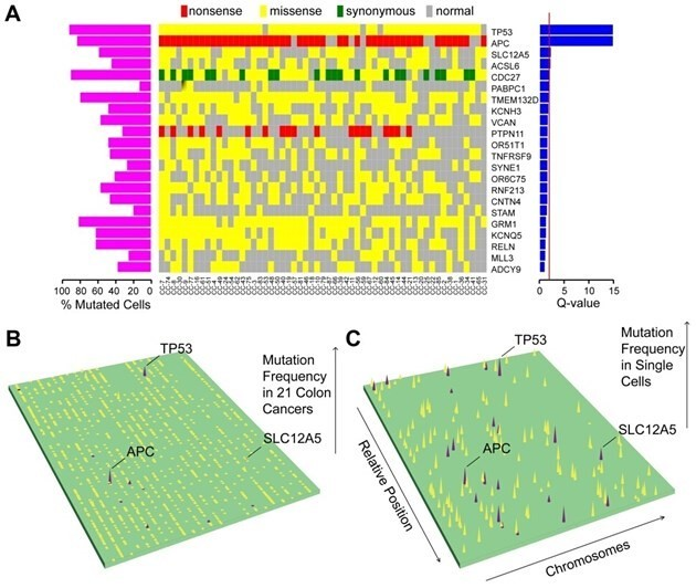 图4 突变图谱及dirver genes预测