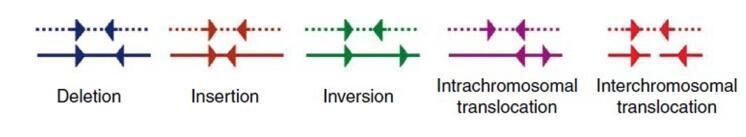 图10  存在结构变异的read对