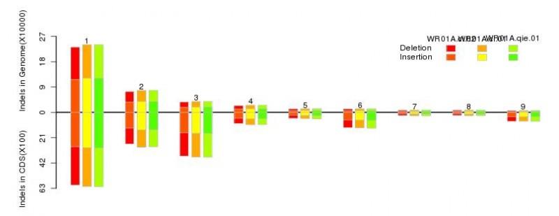 图9  基因组和编码区域InDels分布图